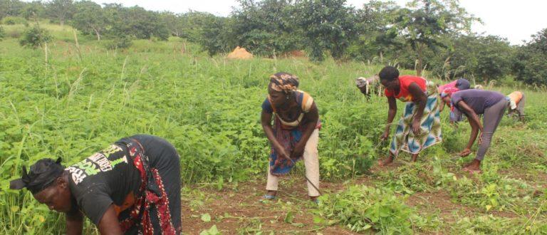 Article : Entrepreneuriat en milieu rural : investir dans les cultures industrielles à partir des revenus des cultures de courte saison