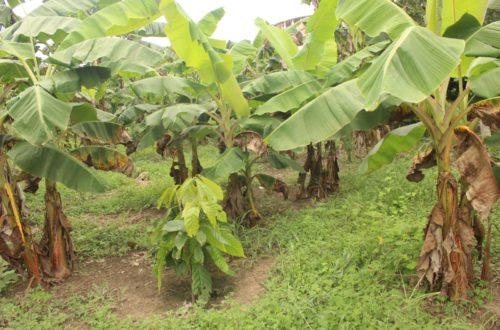 Article : Le Climachakton 2018 se penche sur les solutions idoines pour atténuer le réchauffement climatique en Côte d'Ivoire